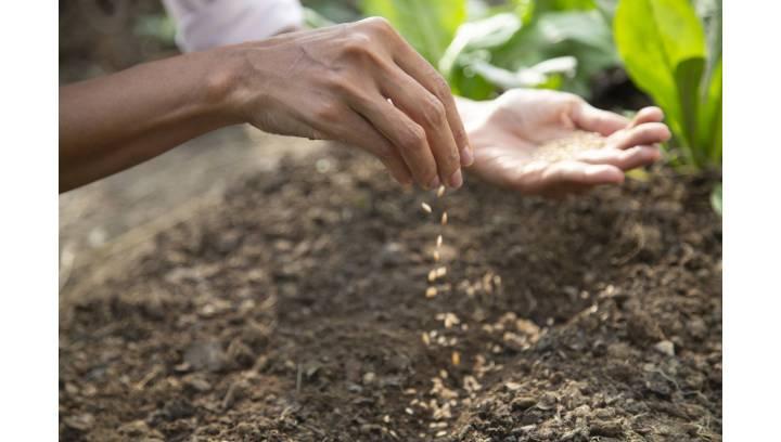 Jak wybrać odpowiedni agregat uprawowo-siewny?
