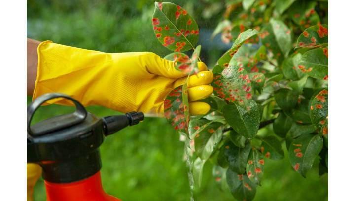 Bezpieczeństwo upraw. Skuteczne środki ochrony roślin